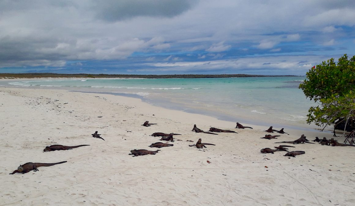 Playa Tortuga Bay, Ecuador