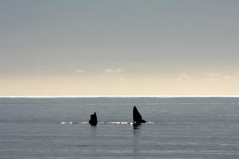 Avistamiento de ballenas en Playa el Doradillo, Puerto Madryn