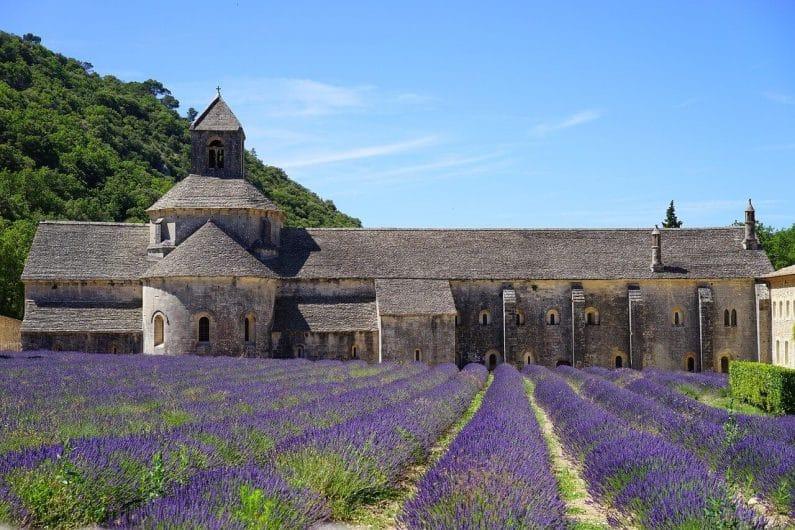 Campos de lavanda Avignon